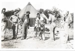 """Fun for all with Dino and the Corsican Donkey """"ONREY"""", 1944 /Corsica"""